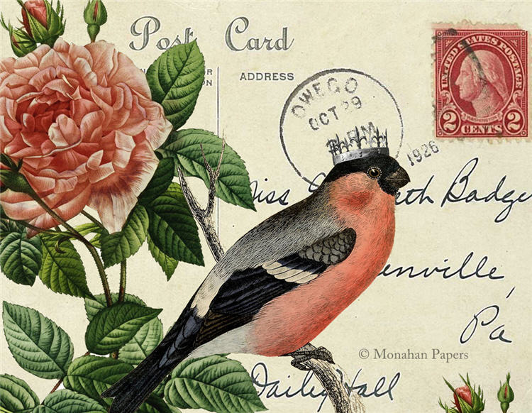 monahan paper SPS984bb red belly bird