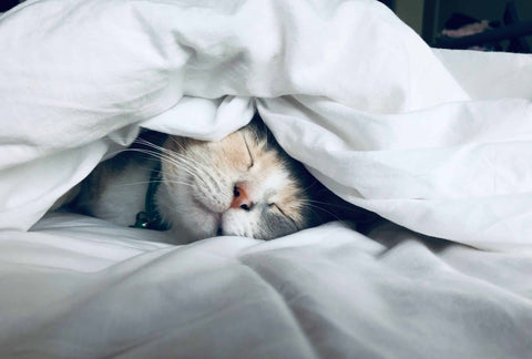 cat sleeping on a bed under a blanket