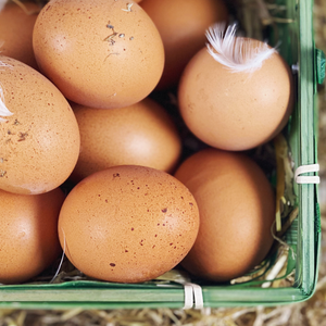 Northern Deli: 12 Free range Eggs from Chatton Wooler