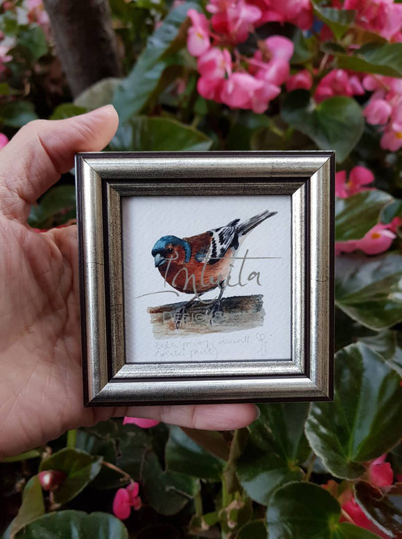 Tiny Chaffinch Framed Giclée Print