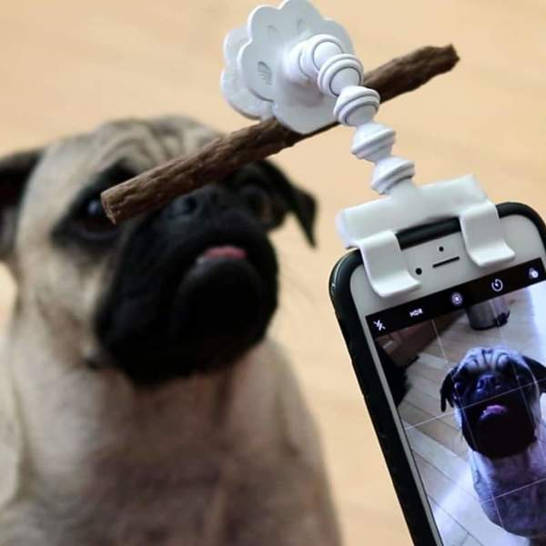 Dog Selfie Stick - 30% OFF Today