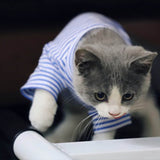 Cat clothes