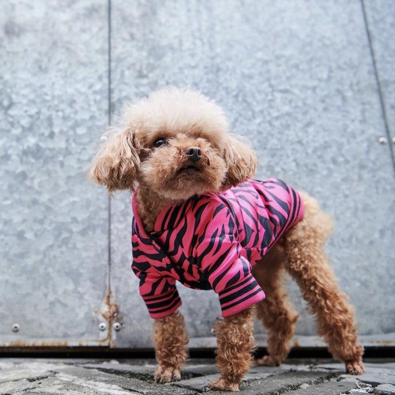 Dog Pink Floyd Leopard Rock Shirt [Heritage Collection]