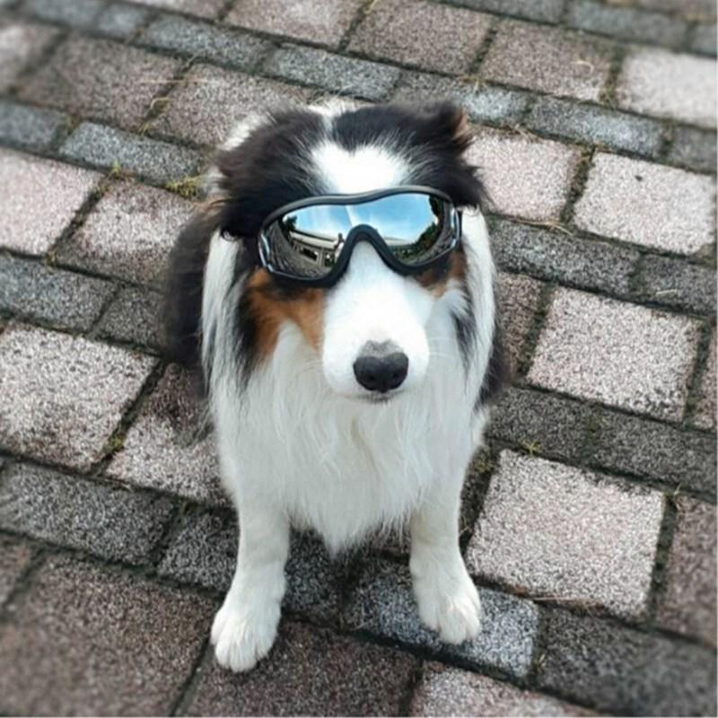 Swaggy Waterproof Googles for Dogs (HOT ITEM)