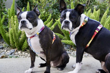 Load image into Gallery viewer, Frenchiestore Adjustable Pet Health Harness | California Dreamin'