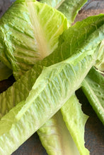 Load image into Gallery viewer, Lettuce cos