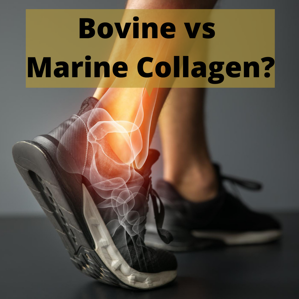 Bovine vs Marine Collagen