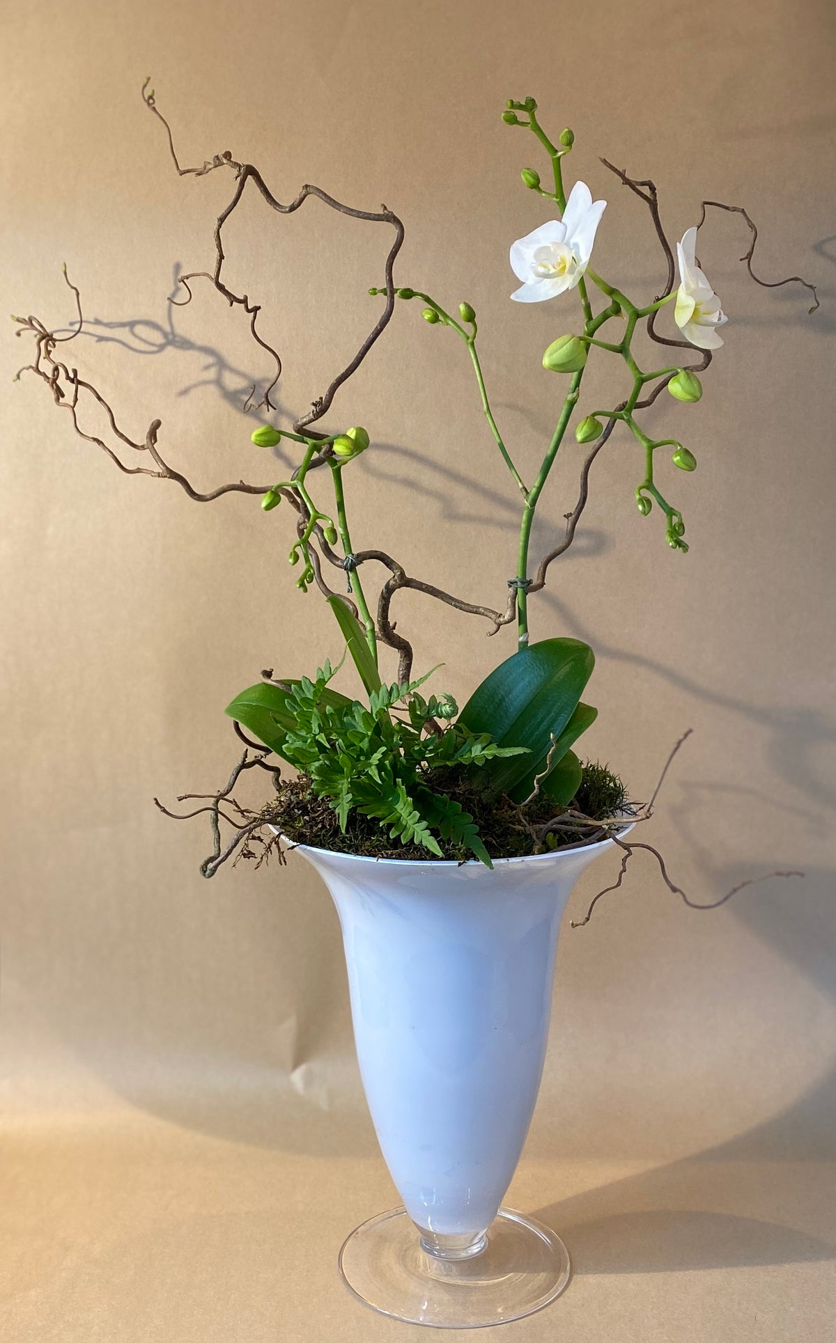 White Orchid in white or black Glass Vase
