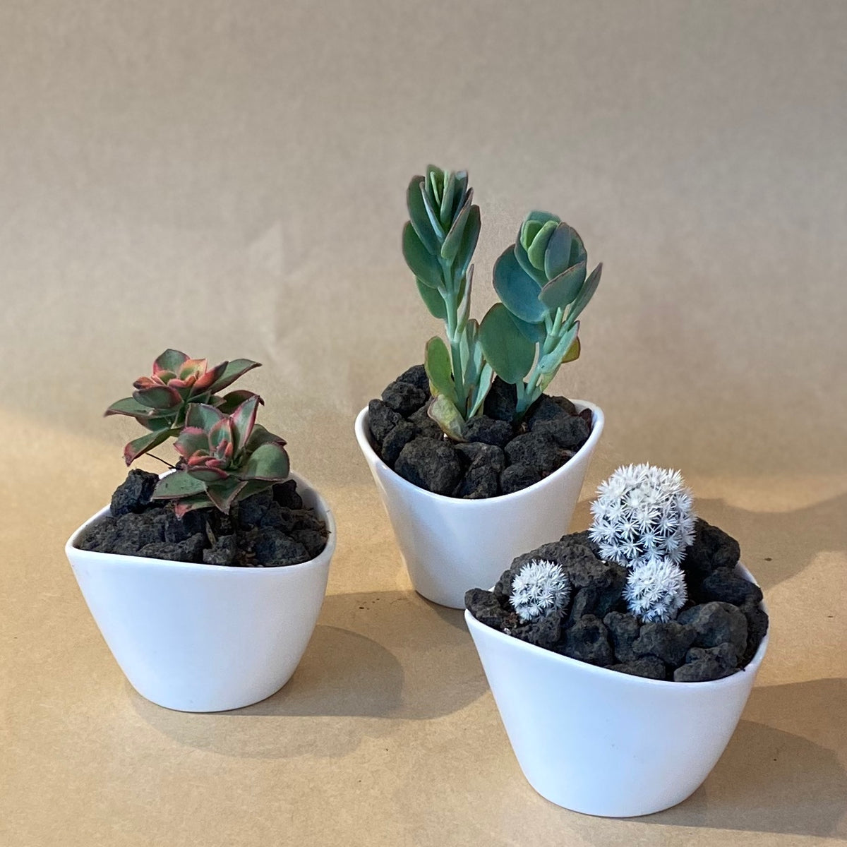 Mini Succulent and Cactus Collection