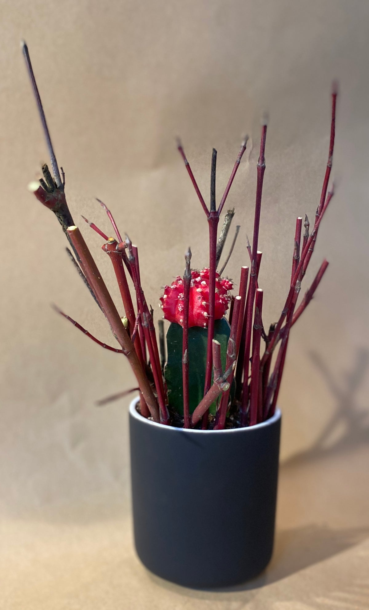 Cactus in Ceramic Container