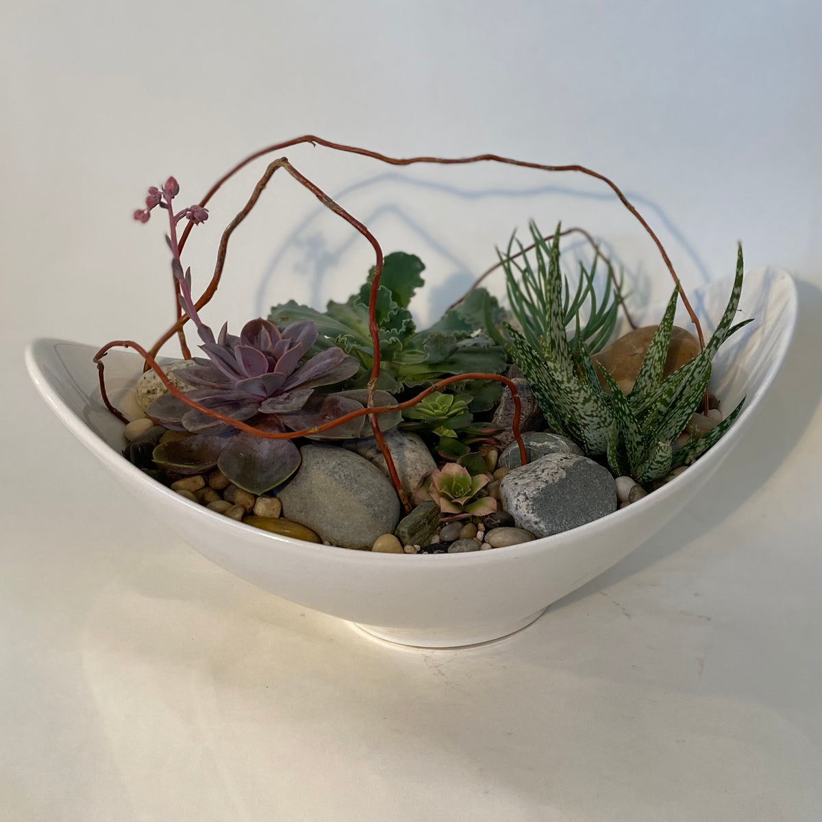 "Succulent Collection in 15"" x 9"" ceramic boat shape"