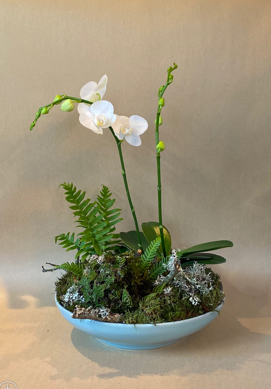 One-of-a-kind Festive Orchid Gift Display