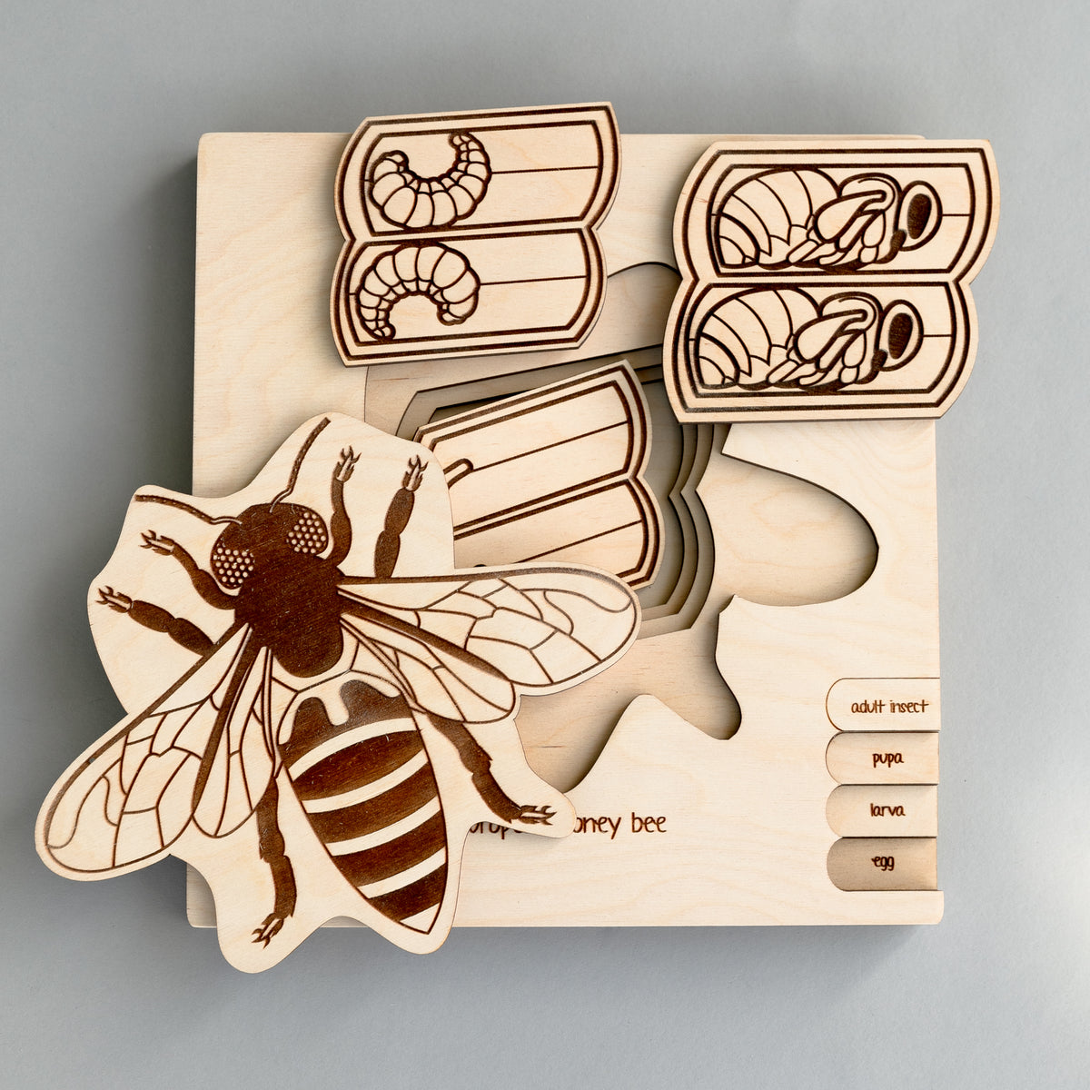 Honey Bee Life Cycle Wooden Puzzle
