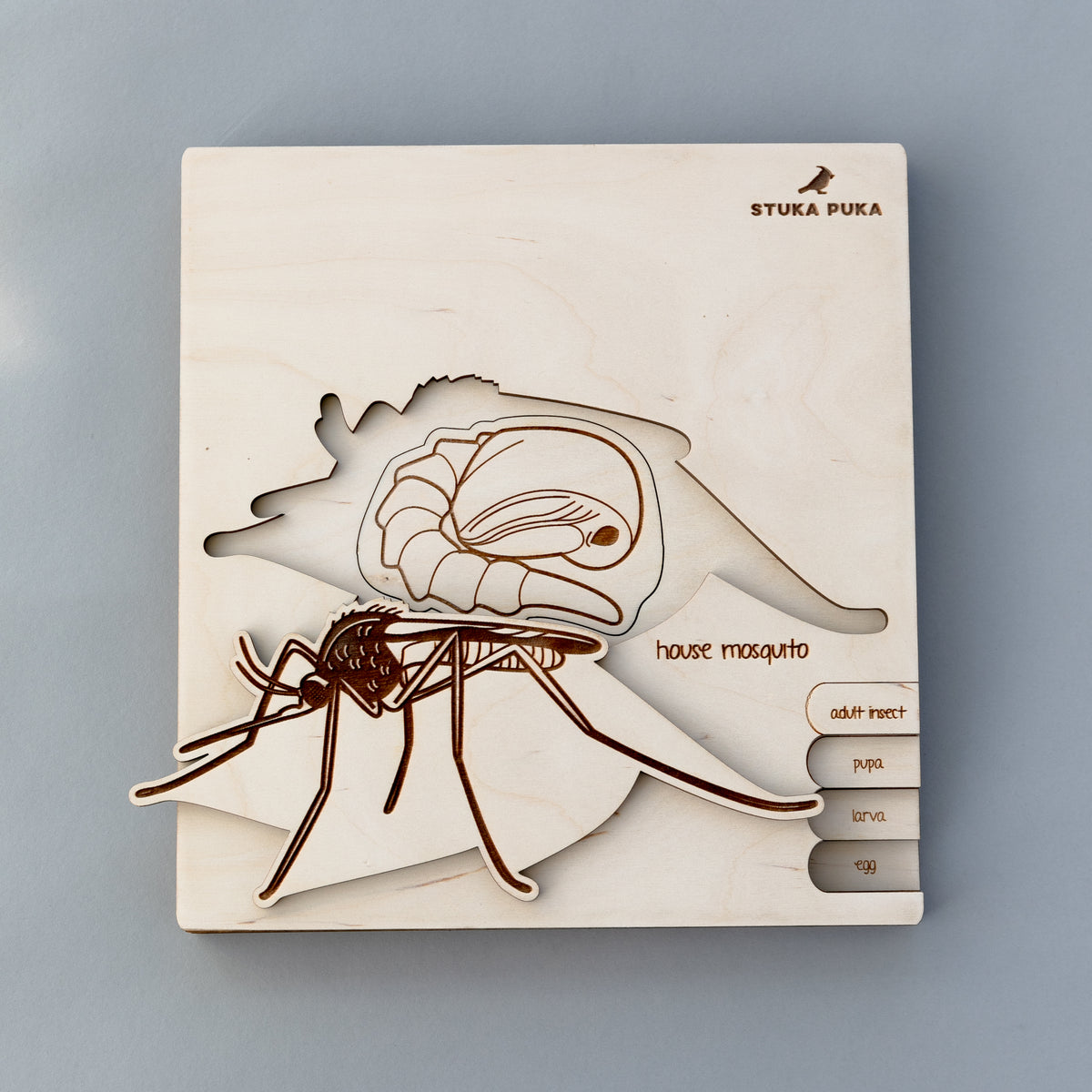 Mosquito Life Cycle Wooden Puzzle