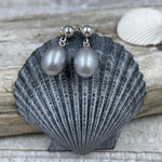 AAA Gray Freshwater Cultured Pearl Earrings