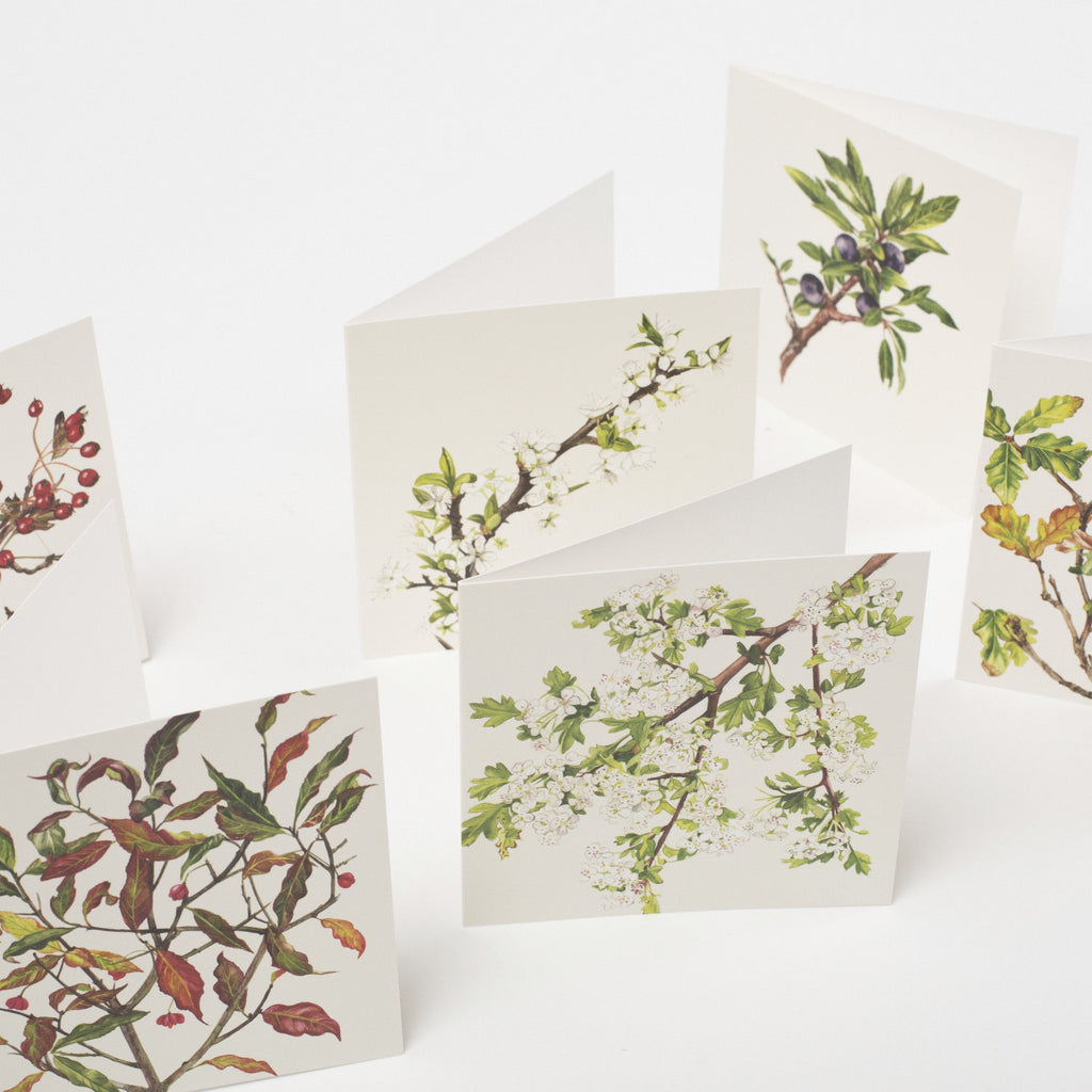 Set of 6 illustrated greeting cards by Sonia Caldwell depicting irish trees data-zoom=