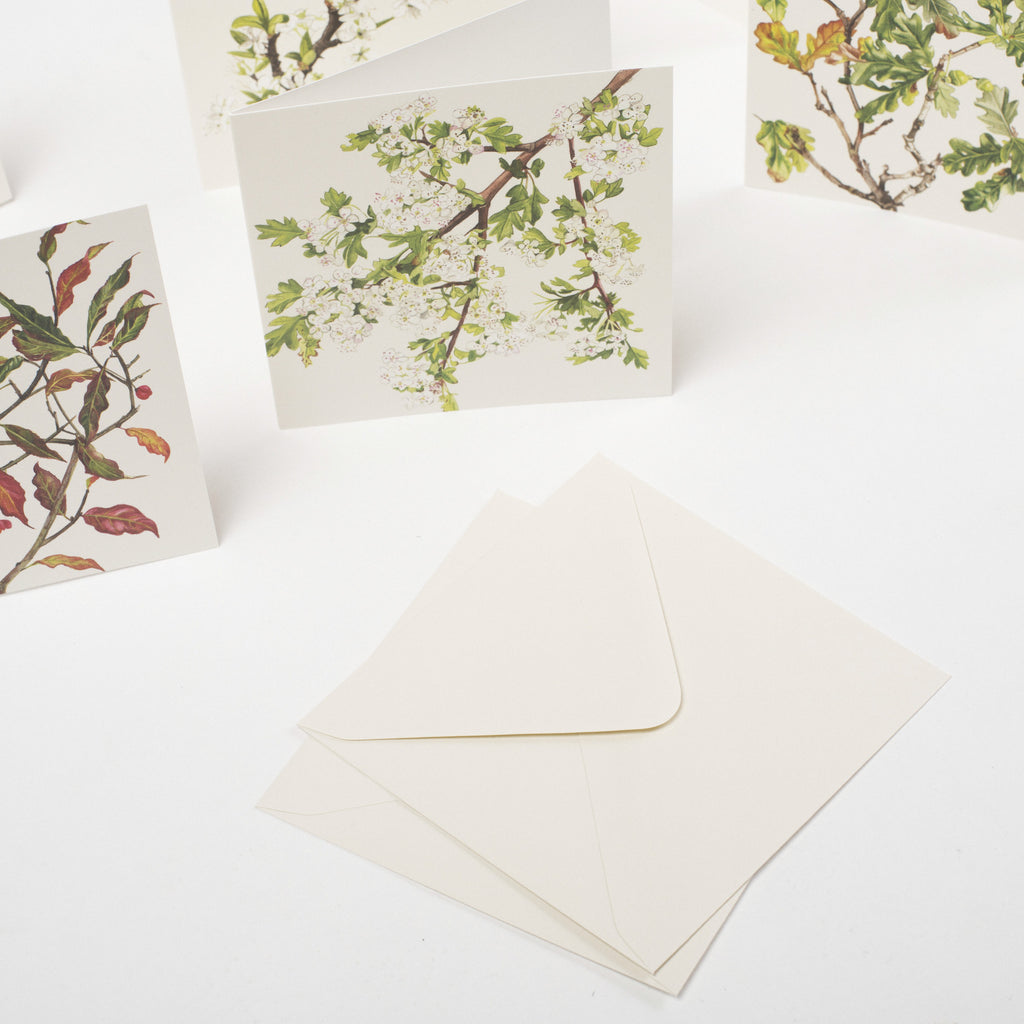 cards & envelopes, designed & made in West Cork data-zoom=