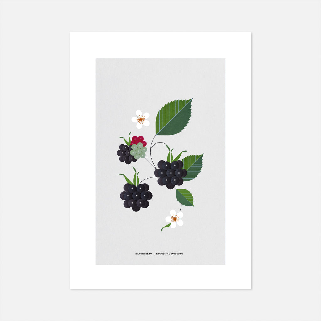 Irish Blackberry bramble print, graphic block colour print of wild Irish plants, gifts for the home, Simple affordable Irish art data-zoom=