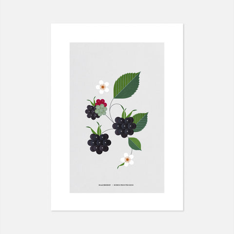 Irish Blackberry bramble print, graphic block colour print of wild Irish plants, gifts for the home, Simple affordable Irish art