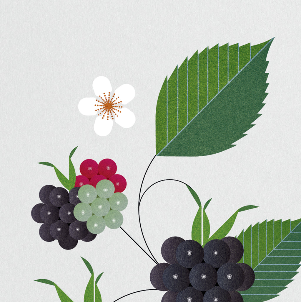 Edible wild plants in Irish countryside, Blackberry bush bramble picture, art by Sally Caulwell, Irish graphic prints, Best in Irish craft data-zoom=