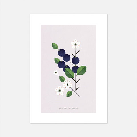 Blackthorn Print