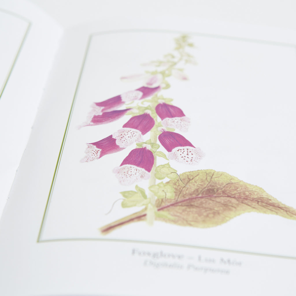 Fox glove flower illustrations, Irish myths and folklore on wild plants and flowers data-zoom=