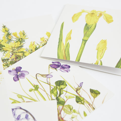close-up of Wild flower greeting cards, water colour illustrations by Sonia Caldwell