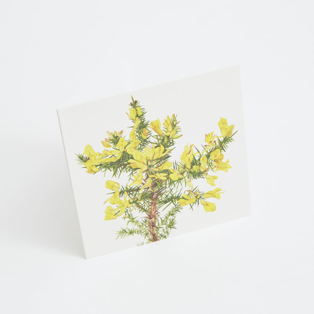 gorse flower greeting card, watercolour illustration by Sonia Caldwell data-zoom=