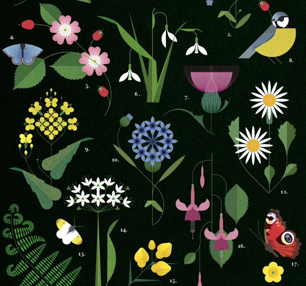 Hedgerows of Ireland Print - Irish Design Shop data-zoom=