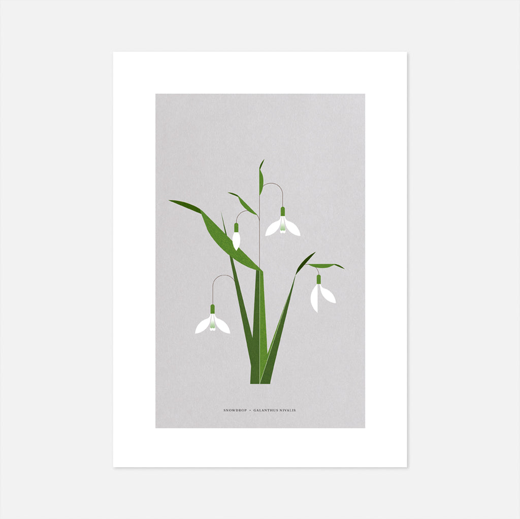 Snowdrop Print data-zoom=