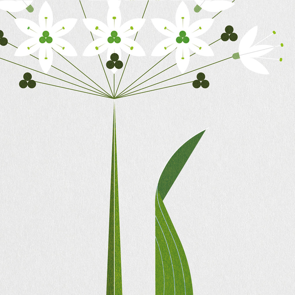 Wild Garlic Print data-zoom=