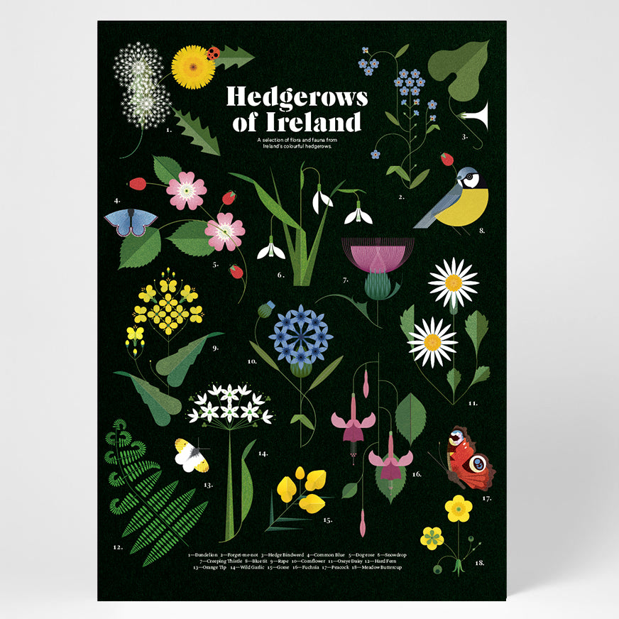Sally Caulwell Hedgerows of Ireland print, Irish flora and fauna print, Irish hedgerows print, limited edition print  data-zoom=