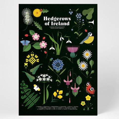 Sally Caulwell Hedgerows of Ireland print, Irish flora and fauna print, Irish hedgerows print, limited edition print