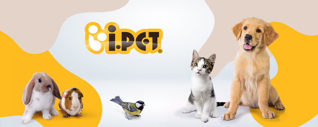 iPet Australia Online Pet Supplies Pet Products Dog Products Cat Products Rabbit Products