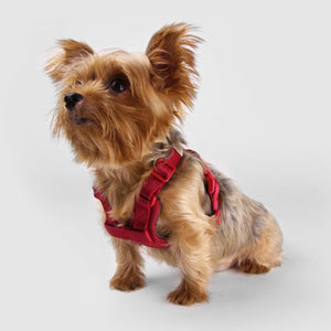 SPUTNIK Comfort Dog Harness - Red