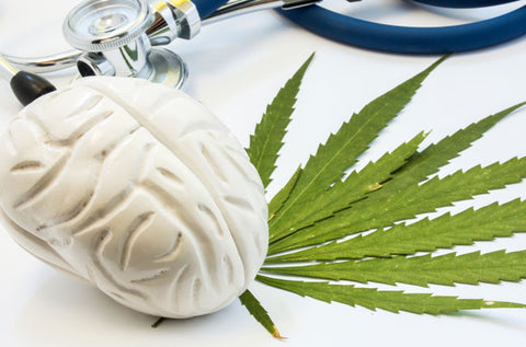 CBD improves blood flow to brain | Blumenes organic CBD hemp creams blog