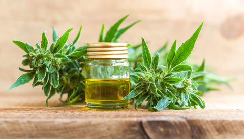 what's the difference between hemp seed and cbd oil | Blumenes CBD Blog