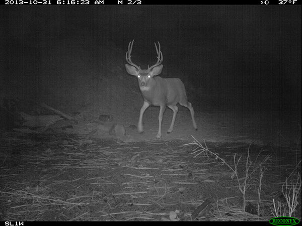 LCD photography for hunting from wildlife LCD cameras with minimized night vision glow