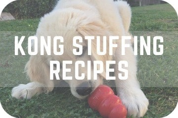 KONG Recipes: 3 Easy-To-Make KONG Recipes For Your Dog