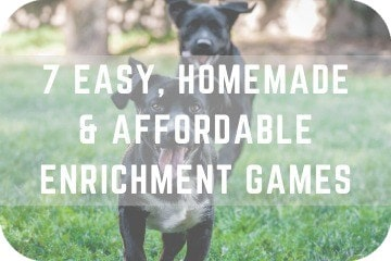 7 Easy, Cheap, and Homemade Enrichment Games and Activities For Dogs