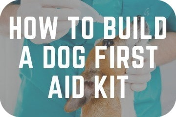 How To Build A Dog First Aid Kit At Home