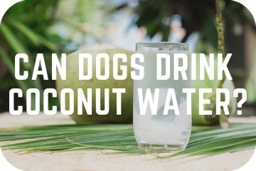 Can Dogs Drink Coconut Water?