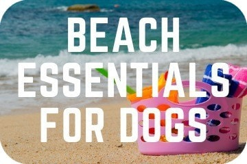 Beach Essentials For Dogs: Everything You Need To Take