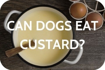 Can Dogs Eat Custard? Safe or Toxic?