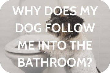 Why Does My Dog Follow Me Into The Bathroom?