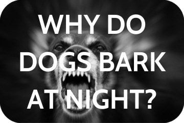 Why Do Dogs Bark At Night? 10 Reasons Why