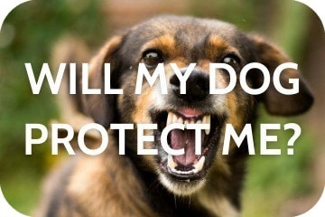 Will My Dog Protect Me?