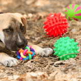 puppy_playing_with_toys