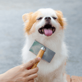 dog_being_groomed
