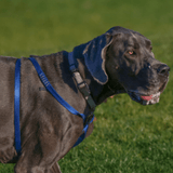 dog_with_harness